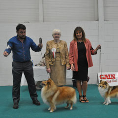 Dun Laoighre Canine Society All Breed Ch Show - LEFT BOB & GS Dog MULTI CH NAVARREM THE CONQUEROR CW 07 (Mr E & Mr P Castillo & Fortune) - RIGHT : RBOB & GS Bitch LONGRANGE SCARLET OHARA JUN CH (Mrs. C Dunne)