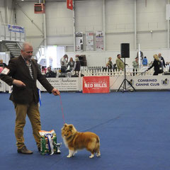 3rd Best puppy in show Degallo The Show Must Go On At Fearnach owned by Mr Damien McDonald.