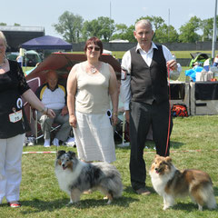 Bray & District Canine Club All Breed Ch Left BOB & GS Dog CH FEARNACH BLUE RHAPSODY AT CLUAINULTAIGH JUN CH (Mrs R Jackson) - Right : GS Bitch CH FEARNACH FROSTY MOON AT LONGRANGE  (Mrs. C Dunne)