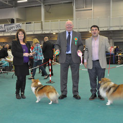 Dublin Dog Show Society Ch Show 27.12.2013 Left Green Star Bitch & BOB LONGRANGE SCARLET OHARA JUN CH (Mrs. C Dunne)  Left Green Star Dog CH IRISH LEGEND OF NAVARREM JUN CH, CJW 12 (Mr E & Mr P Castillo & Fortune)