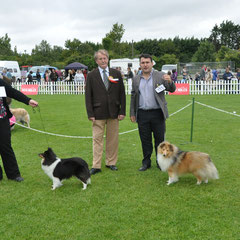 1 Day Irish Circuit :Navan Ch Show 17.08.2013  Right Green Star Bitch & BOB KARYSHANTY PURE DESTINY OF MOIFARA ( Miss M Farrell)   Right Green Star Dog JUN CH, CJW 12 IRISH LEGEND OF NAVARREM (Mr E & Mr P Castillo & Fortune)