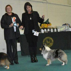 Newtownards & Dist Canine Club 12th May 2013 - Green Star and Reserve Best of Breed - Pic taken at BullBreeds Ch Show 2012- unfotunatelly raining too heavely on this show for a pic
