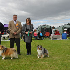 2 Day Irish Circuit : Clonmel All Breed Ch Show 18.08.2013  Left GS Dog & BOB CH JUN CH, CJW 12 IRISH LEGEND OF NAVARREM (Mr E & Mr P Castillo & Fortune)  Right Green Star Bitch  CHAMPION FEARNACH FROSTY MOON AT LONGRANGE JUN CH CJW11 CW11 CW 13 (Mrs. C D