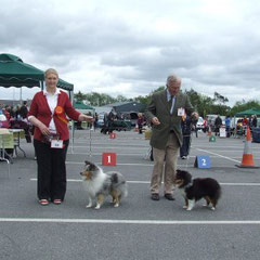 Munster Canine All Breed Ch Show- Left Green Star Dog & BOB  FEARNACH BLUE RHAPSODY AT CLUAINULTAIGH JUN CH (Mrs R Jackson) Right Green Star Bitch ARDLYN KLASSYMAR MYSTERY (Mr A. Finnan)