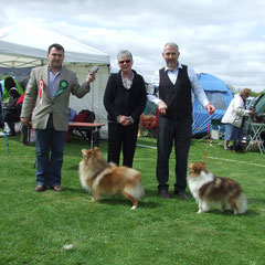 Fermoy All Breed Int. Ch Show 5th May 2013 Left: Best Of Breed  MULTI CH NAVARREM THE CONQUEROR CW 07 (Mr E & Mr P Castillo & Fortune)   Right : CH FEARNACH XIT TO HEAVEN (Damian D Mc Donald)