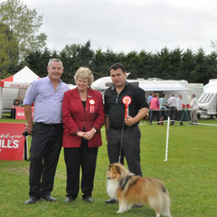 Carlow All Breed Ch Show 21.09.2013 Best of Breed & Green Star Dog  was JUN CH, CJW 12 IRISH LEGEND OF NAVARREM (Mr E & Mr P Castillo & Fortune)  No pic of bitch Green Star Bitch was  CHAMPION FEARNACH FROSTY MOON AT LONGRANGE  (Mrs. C Dunne)