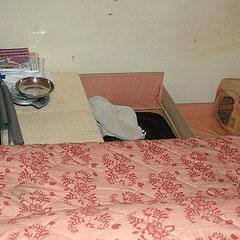Fertiger Wurfplatz, mit einem Schlafplatz für mich damit ich immer in der Nähe bin falls es nötig ist