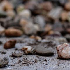 einzelne Steine des Kieses liegen täglich aufgewühlt auf dem Betonstein
