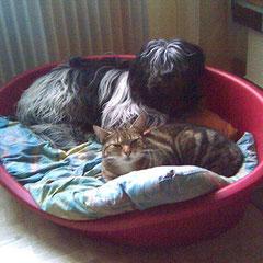 Zwei die sich verstehen, Februar 2008