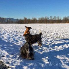 5. Januar 2015: richtig schönes Wetter zum Herumtollen :-))