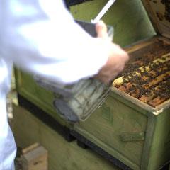 Bienenstock beim Bauernhof Köhne