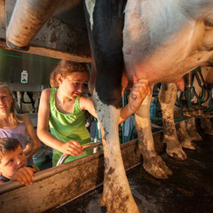 Kühe selber melken auf dem Hof Köhne