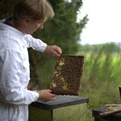 Honigexkursion auf dem Hof Köhne