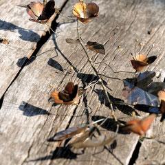 Branche fleurie en cuivre - Photo : Gabrielle Voinot