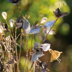 Bouquet bijou - Photo : Gabrielle Voinot