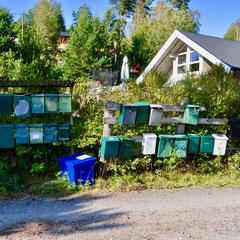 Høysand, 26.08.2019
