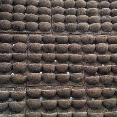 fibra de coco, jardin vertical,