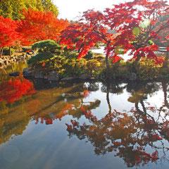 水面に映るいろは紅葉