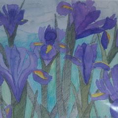 Schwertlilien, 2000, Aquarell mit Tusche und Stiften, 24 x22 cm
