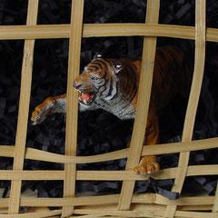 Gekooide tijger.