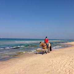 Equitation au centre Lakhish