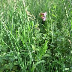 Unter hohem Gras gibt es eine untere Pflanzenschicht