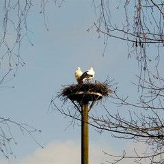 Störche haben ihr Nest bezogen
