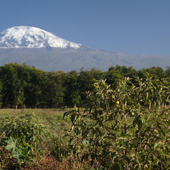 Kilimandscharo.