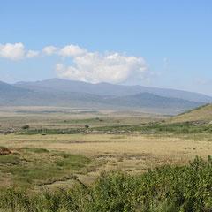 Landschaft im Juli.