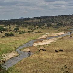 Elefanten am Tarafluss im Tarangire-Nationalpark im Juli 2012.