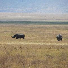 Rhino im Ngorongoro-Krater in Juli 2012.