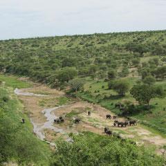 Elefanten am Tarafluss im Tarangire-Nationalpark im Januar 2014.