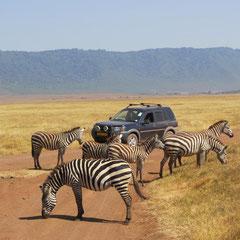 Zebras im Juli.