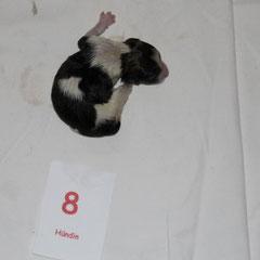 25.07.2013 Baffina wird geboren...