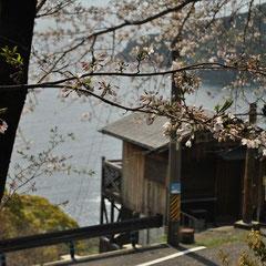 春の徐福茶屋