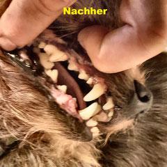 Nach der Zahnbehandlung