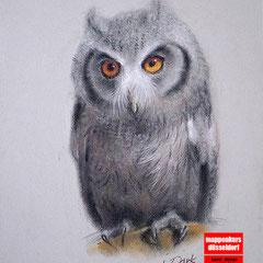 Tierzeichnen, Zeichnen mit Buntstift, Zeichnenlernen, Zeichenkurs für Anfänger, Kunstschule Düsseldorf