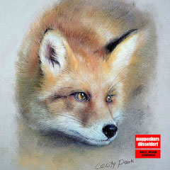 Tierzeichnen mit Buntstift,  Zeichenkurs für Anfänger, Tierzeichnen, Kunstschule Düsseldorf