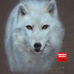 Tierzeichnen, Zeichnen  mit Buntstift, Zeichnenlernen, Zeichenkurs für Fortgeschrittene, Kunstschule Düsseldorf