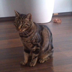 Katze Crash aus Gilching