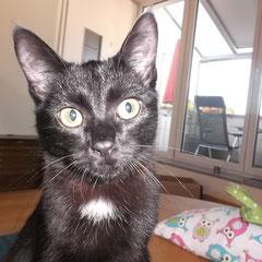 Katzenbaby Strolchi aus Germering