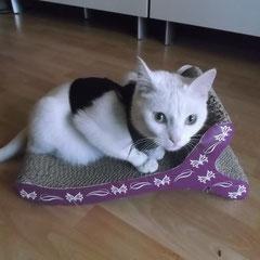 Katze Cat aus Germering
