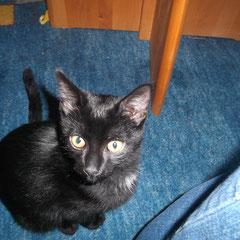 Katzenbaby Susi aus Germering