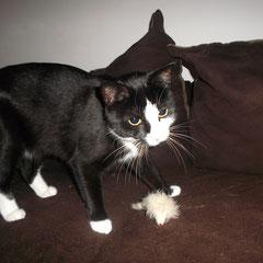 Katze Mausi aus München-Pasing