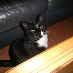 Katze Amani aus Germering