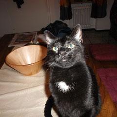 Katze Tebartz aus Germering