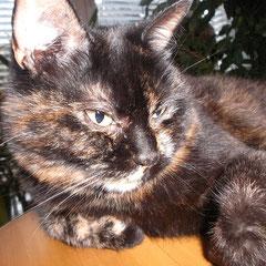 Katze Fay aus München-Pasing