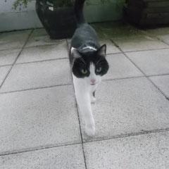 Katze Mäuschen aus Germering
