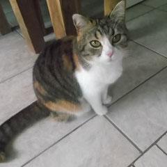 Katze Freundin aus München-Lochhausen