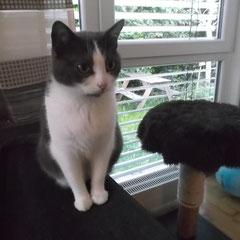 Katze Resi aus München-Aubing